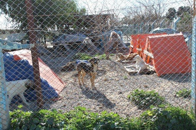 Didim Belediye Barınağından Sokak Hayvanları İçin Anlamlı Çalışma