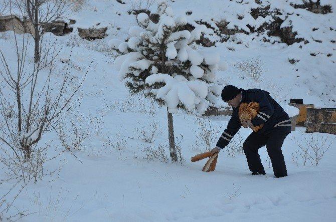 Bünyan Belediyesi Sokak Ve Yaban Hayvanları İçin Doğaya Yiyecek Bıraktı