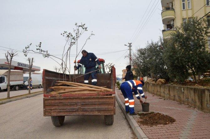 Kozan'da bulvar ve caddeler ağaçlandırılıyor