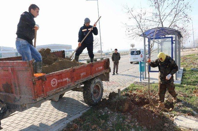 Yunusemre'de 2023 Çınar Toprakla Buluştu