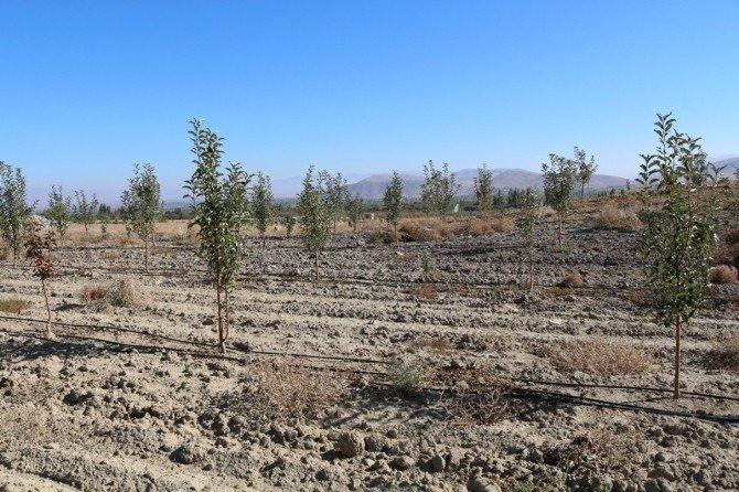 Niğde'de 'Bir Karış Toprak Boş Kalmasın' Projesinde Hedeflere Ulaşıldı