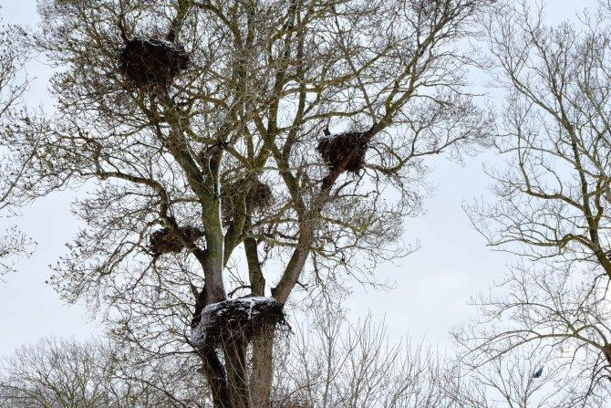 Kuş Cenneti'nden kartpostallık kareler