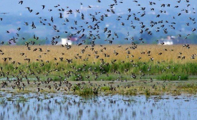 Hersek Lagünü'ne Kuş Gözlem Evi Yapılacak