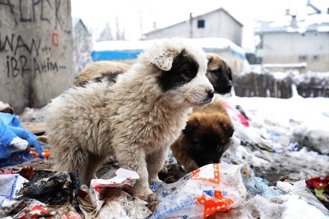 Yavru Köpekler Miniklere Emanet