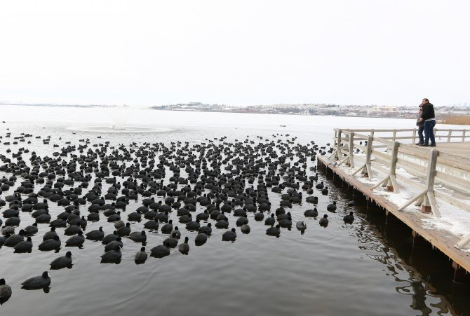 Donmuş göldeki yabani kuşlar, yiyecek bulmakta zorlanıyor