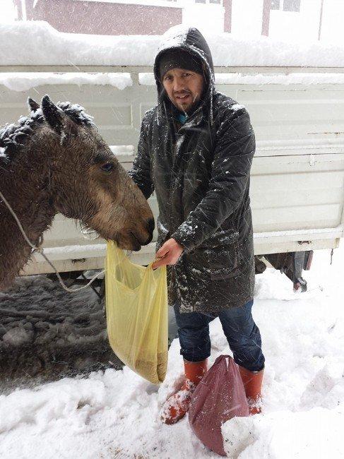 Soğukta Kalan Atlara Vatandaştan Yardım