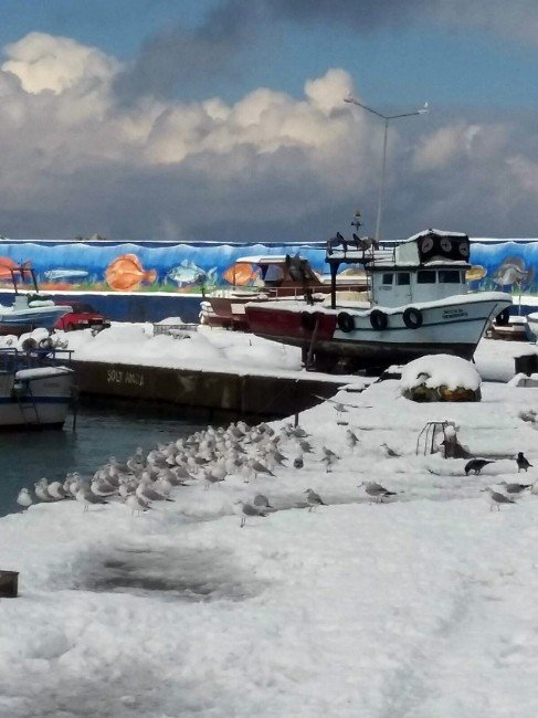 Dondurucu Soğuklarda Martıların Balık Ziyafeti