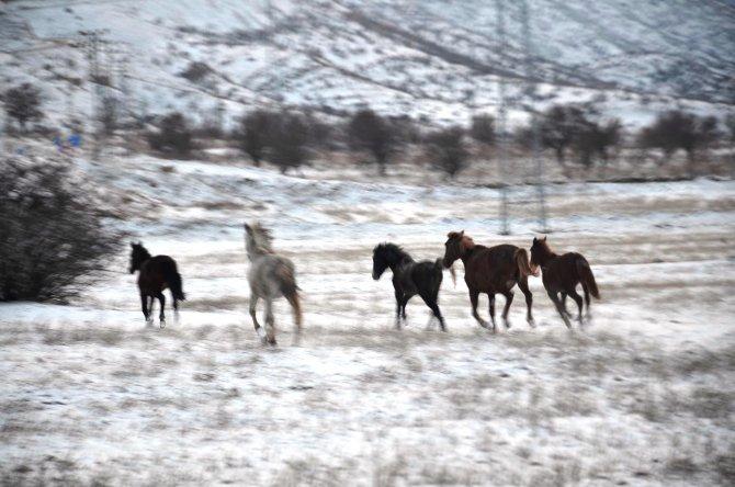 Aç kalan yılkı atları köylere iniyor