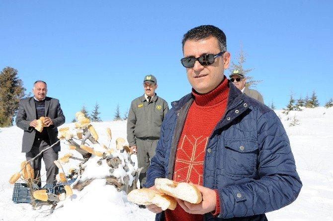 Yaban Hayvanları İçin Doğaya Ekmek Bırakıldı