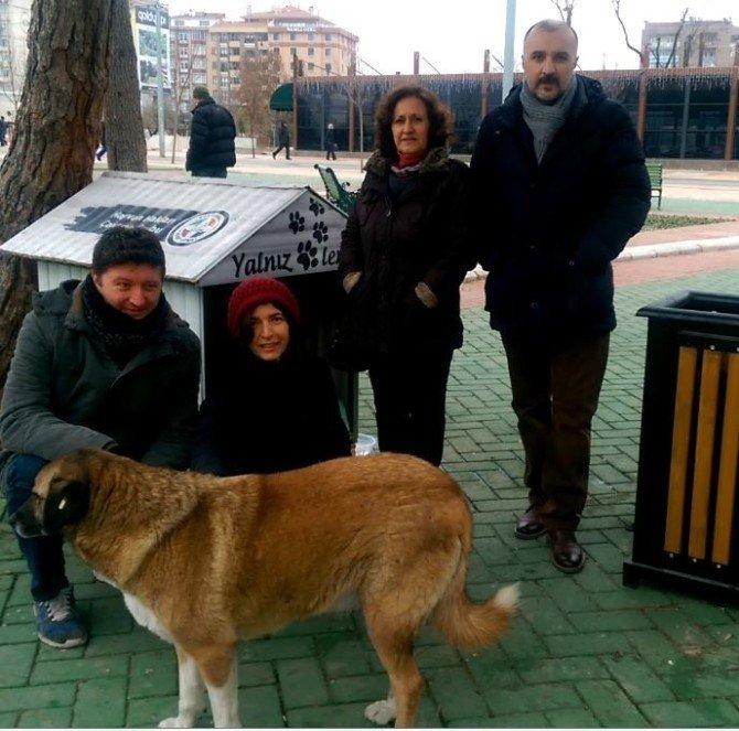 Sokak Hayvanları İçin 'İnsanlığımız Buz Tutmasın' Çalışması