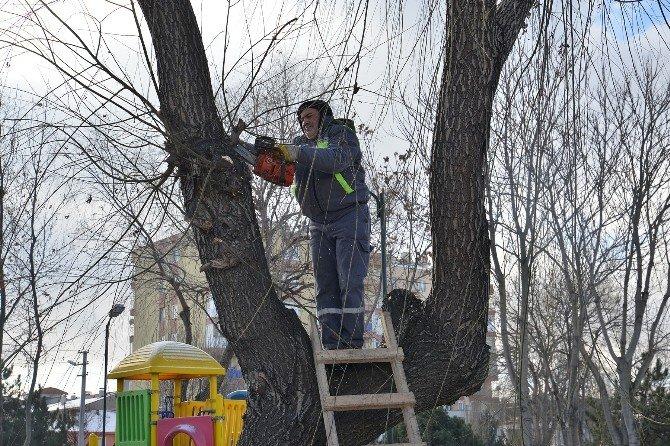 Tepebaşı'nda Ağaçlar Budanıyor