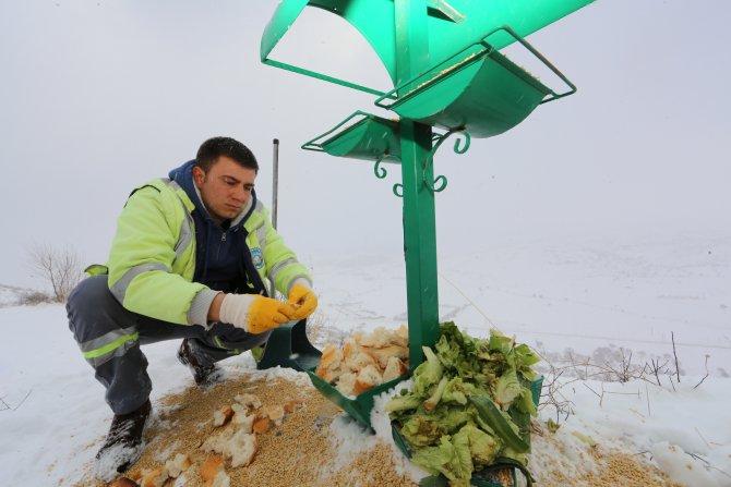 Yaban hayvanları için açık araziye yiyecek bırakıldı