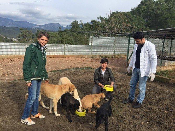 İmam Hatip Liseli Öğrencilerden Hayvanlara Mama Ve Süt