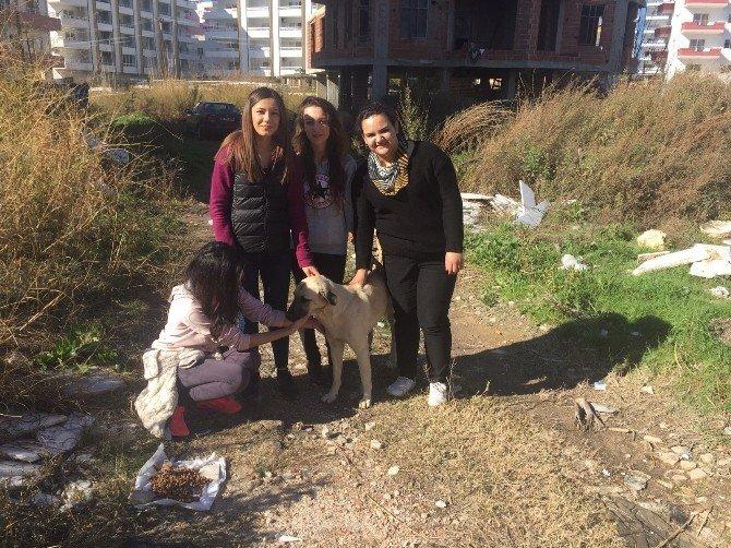 Silifke'de Sokak Hayvanlarına Öğrenciler Sahip Çıktı