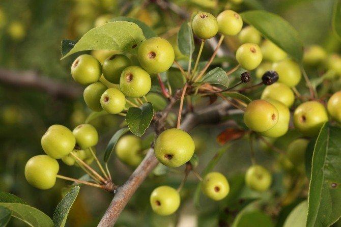 Uzmanından Bitki Çayı Demlemenin Püf Noktaları
