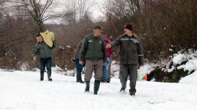 Düzce'de Aç Kalan Kuşlar İçin Doğaya Yem Bırakıldı