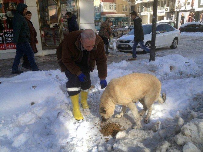 Bafra'da Sokak Hayvanları Unutulmadı