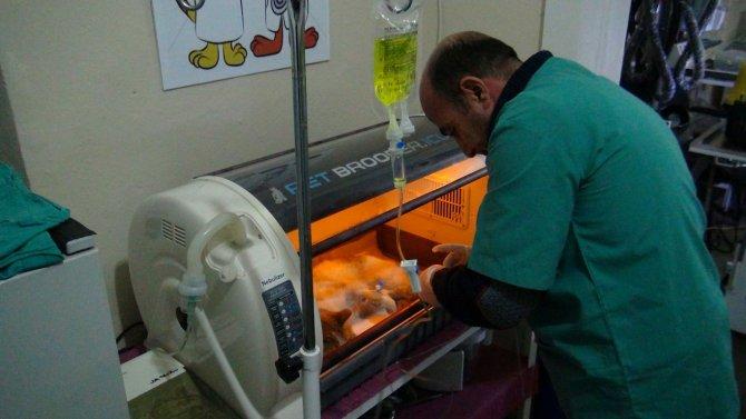 Bölgenin ilk donanımlı hayvan hastanesi Tatvan'da kuruldu