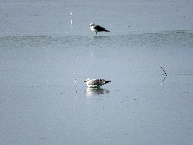 Beyşehir Gölü Kıyıları Buz Tuttu