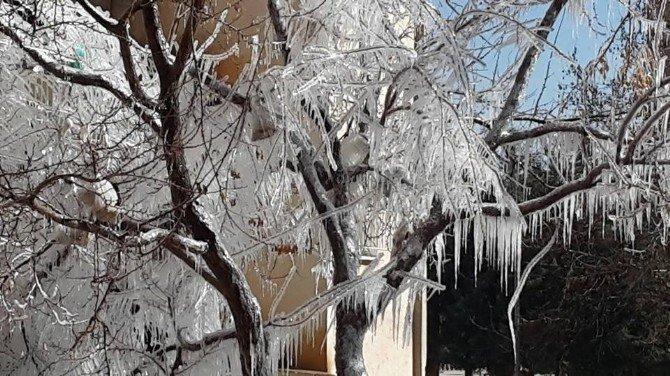 Kilis'te Soğuktan Ağaçlar Da Dondu