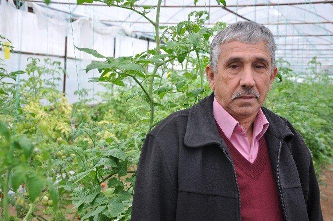 Simav'daki Seralarda Topraksız Tarım Alanı 100 Dönüme Ulaştı