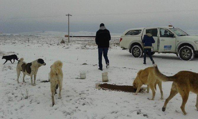 Soğuk Havada Sokak Hayvanları Aç Kalmadı
