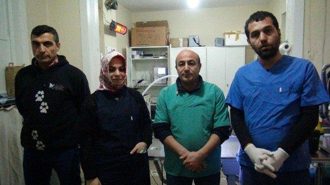 Bölgenin İlk Donanımlı Hayvan Hastanesi Tatvan'da Kuruldu