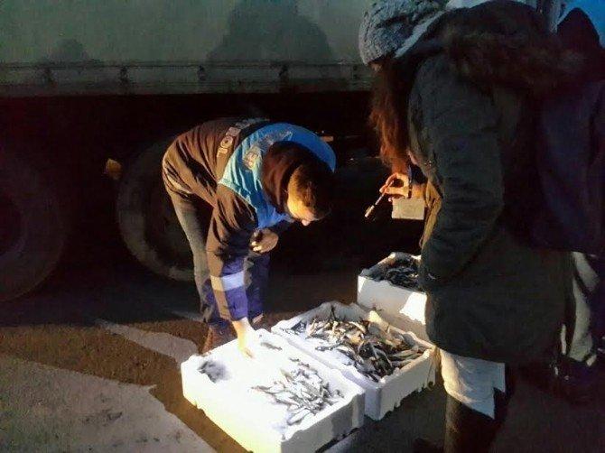 Boy Yasağına Riayet Etmeyen Balıkçılara Para Cezası