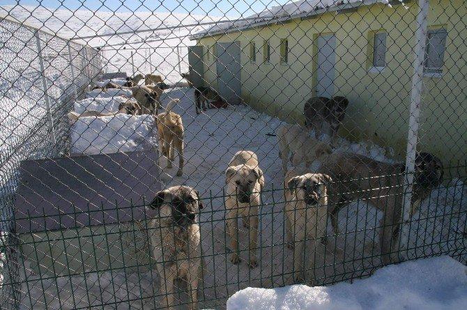 Yozgat Belediyesi Donmak Üzere Olan Sokak Hayvanlarına Sahip Çıktı