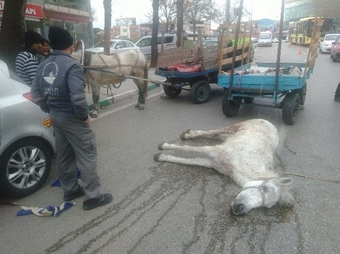 Hurdacı Ölen Atının Başından Ayrılmadı