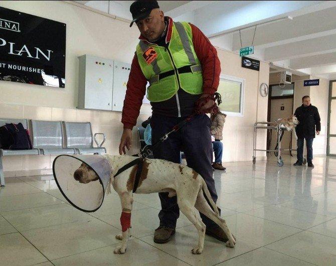 İstanbul'a Tedavi İçin Götürülen Köpek İyileşiyor