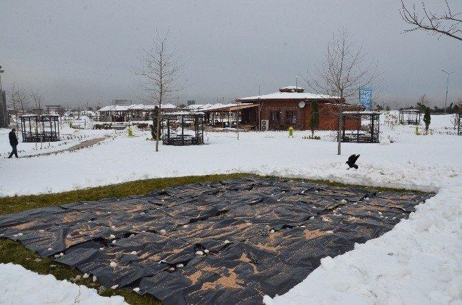 Trabzon'da Sokak Hayvanları Ve Kuşların Beslenebilmesi İçin İstasyonlar Oluşturuldu