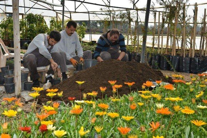 Konyaaltı Belediyesi, Sera Sayısını Artırıyor