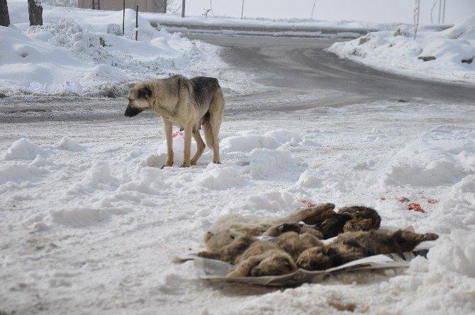 Köpek Yavruları Donarak Öldü