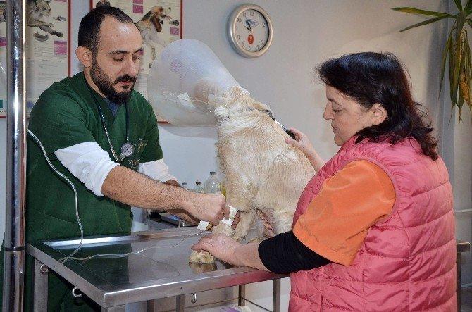 Kışın Evcil Hayvan Bakımına Dikkat