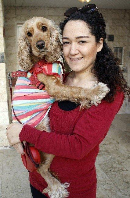 Kiraz Köpeğin Hukuk Zaferi