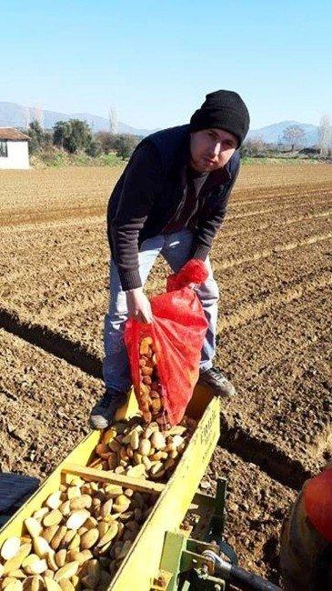 Patateste Üreticinin Umudu Bahara Kaldı