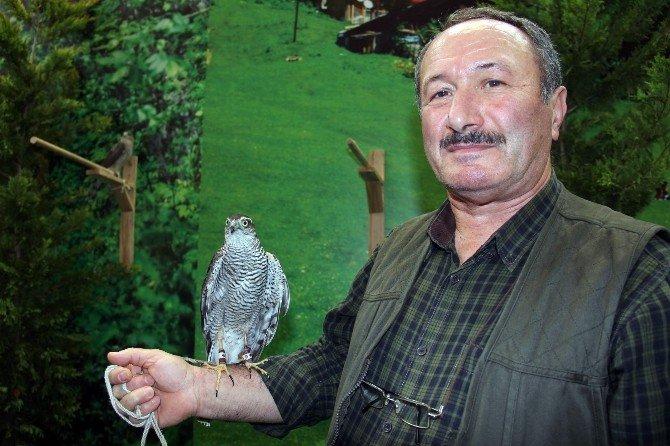 Rize'nin Atmacası, Aksaray'ın Malaklısı Fuarın İlgi Odağı