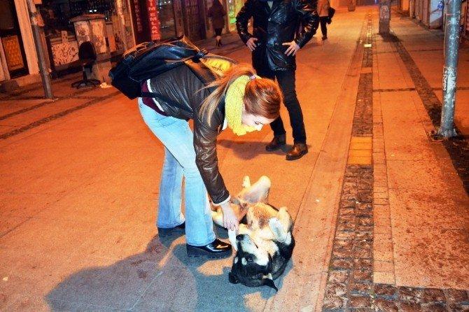 Sokak Hayvanları Saldırılarından Korunmanın TEK Yolu Sevgi