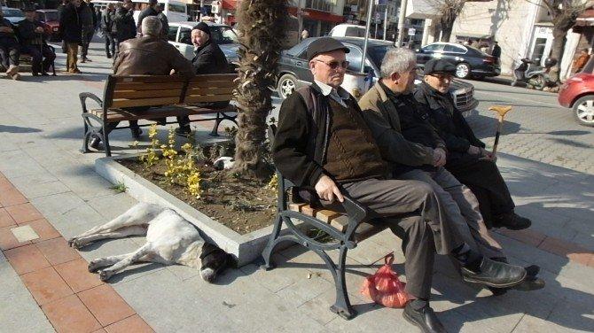 Burhaniye'de Bahar Havası Vatandaşı Sokağa Döktü