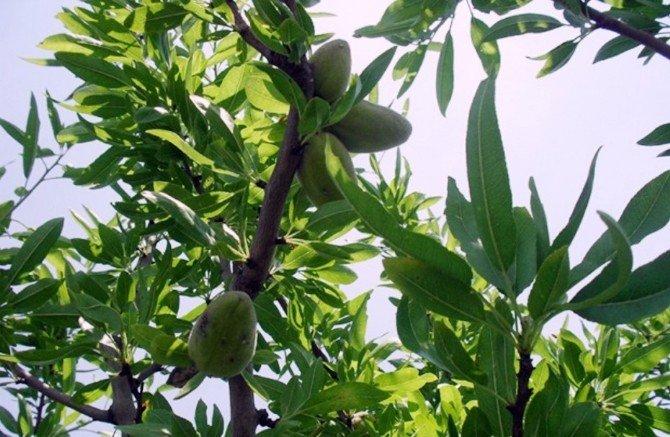 Adana'da 400 Çiftçi Aileye 2.5 Milyon Kredi Verildi