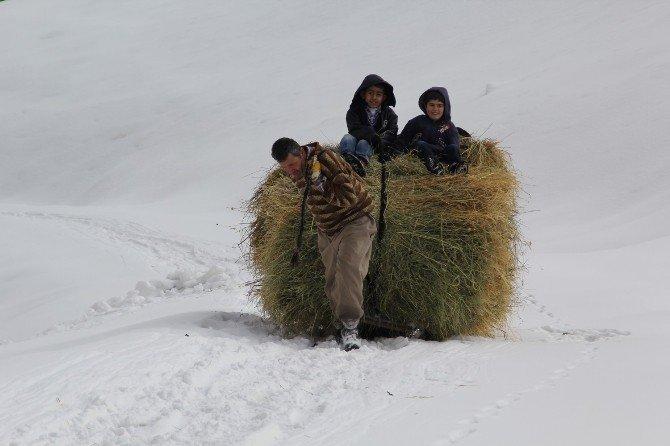 Hayvanlar İçin Dağdan Kızakla Ot Taşıyorlar