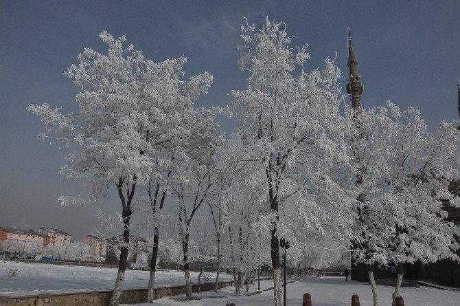 Karsta Kırağı Tutan Ağaçlar Kartpostallık Görüntüler Oluşturdu