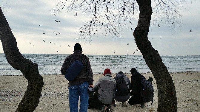 Kuş Fotoğrafçıları Büyük Karasırtlı Martıyı Görüntüleyebilmek İçin İstanbul'a Akın Etti