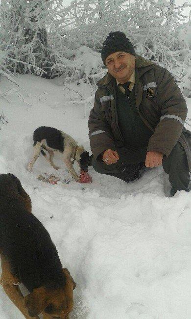 Bursa'da Yaban Hayvanları Unutulmadı