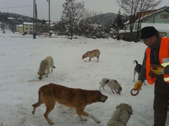 Yaylada Karda Aç Kalan Hayvanlar Unutulmadı