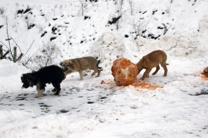 Gümüşhane'de Yaban Ve Sokak Hayvanlarının Yemleme Çalışmaları Devam Ediyor