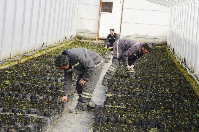 Meram Belediyesi Bitkisini Kendi Üretiyor
