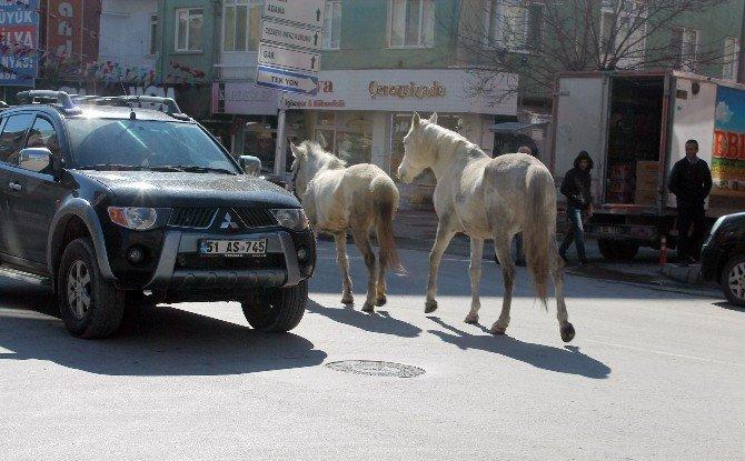 Başıboş Atlar Görenleri Şaşırttı