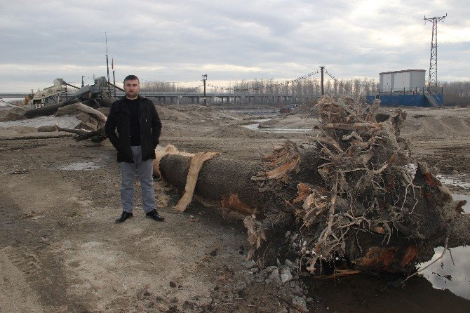 Ağaçlar, Tarihi Köprülere Zarar Veriyor